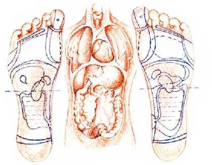 voet reflexology tekening